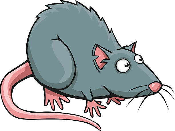 rat-clipart-vector-8